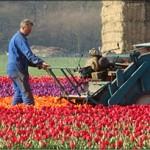 Praca w Holandii 2012 – perspektywy