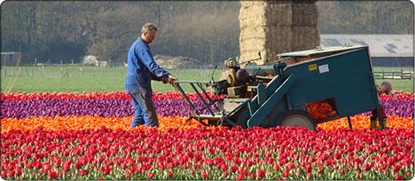 Holandia praca 2012